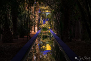 Cyril Mouty Photography jardin majorelle
