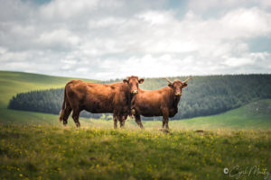 Auvergne campagne countryside